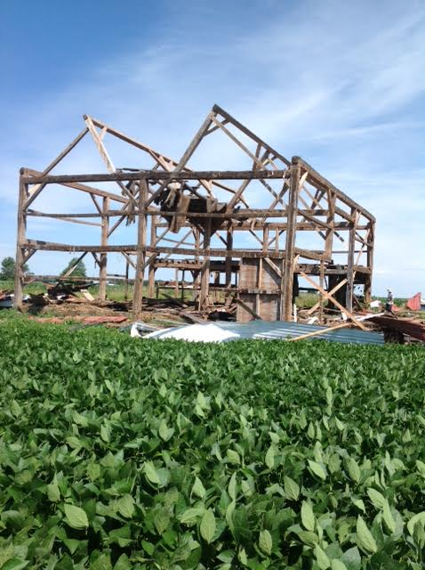 "Former ""meadow barn"" surrounded by soybeans"