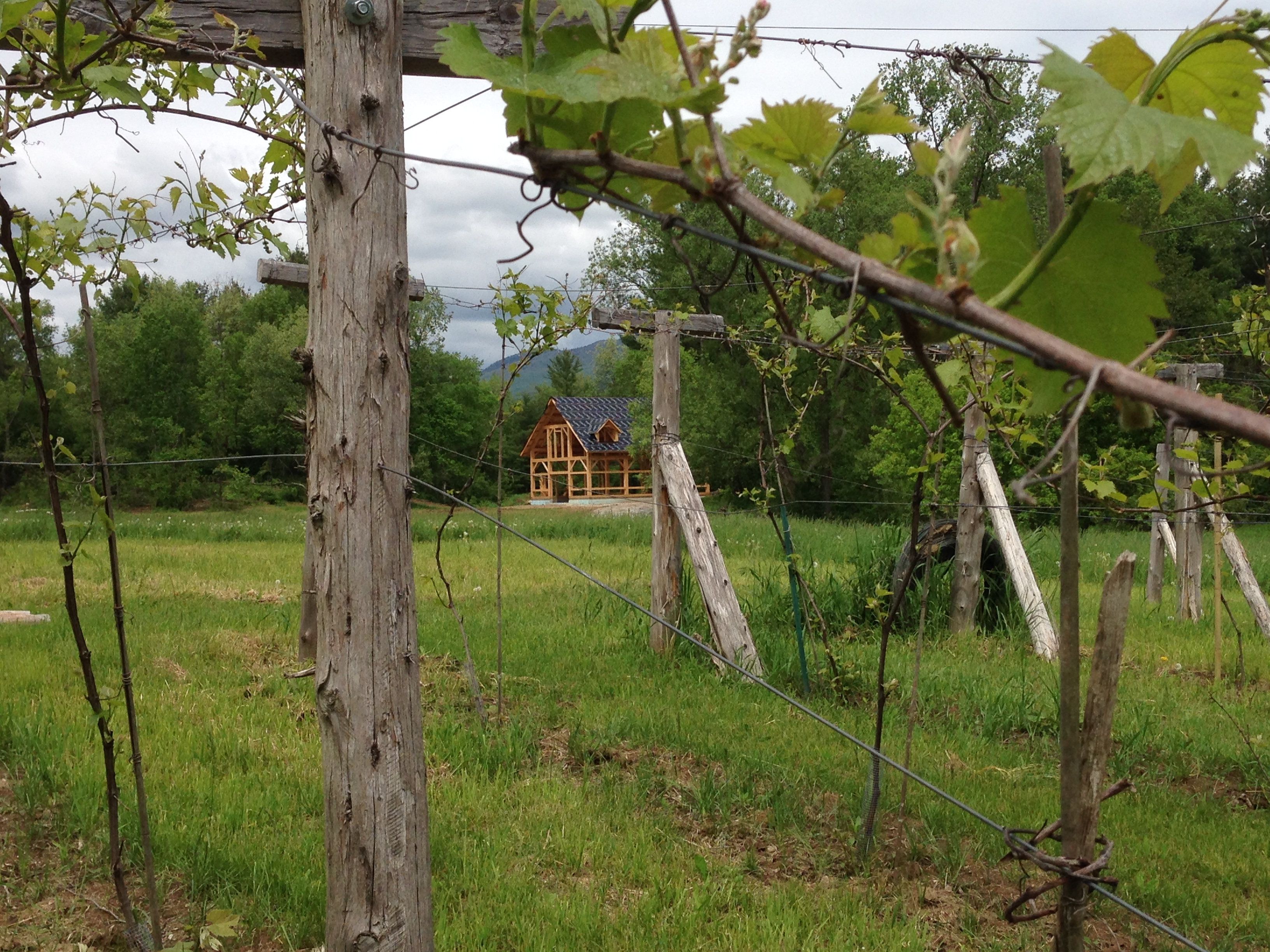 Timber frame barn in vineyard green mountain timber frames