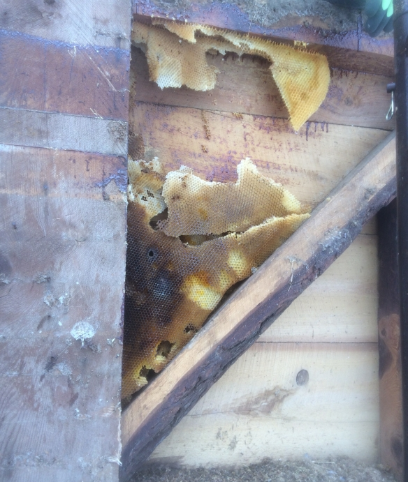 honey comb in the wall of benson barn for sale green mountain timber frames