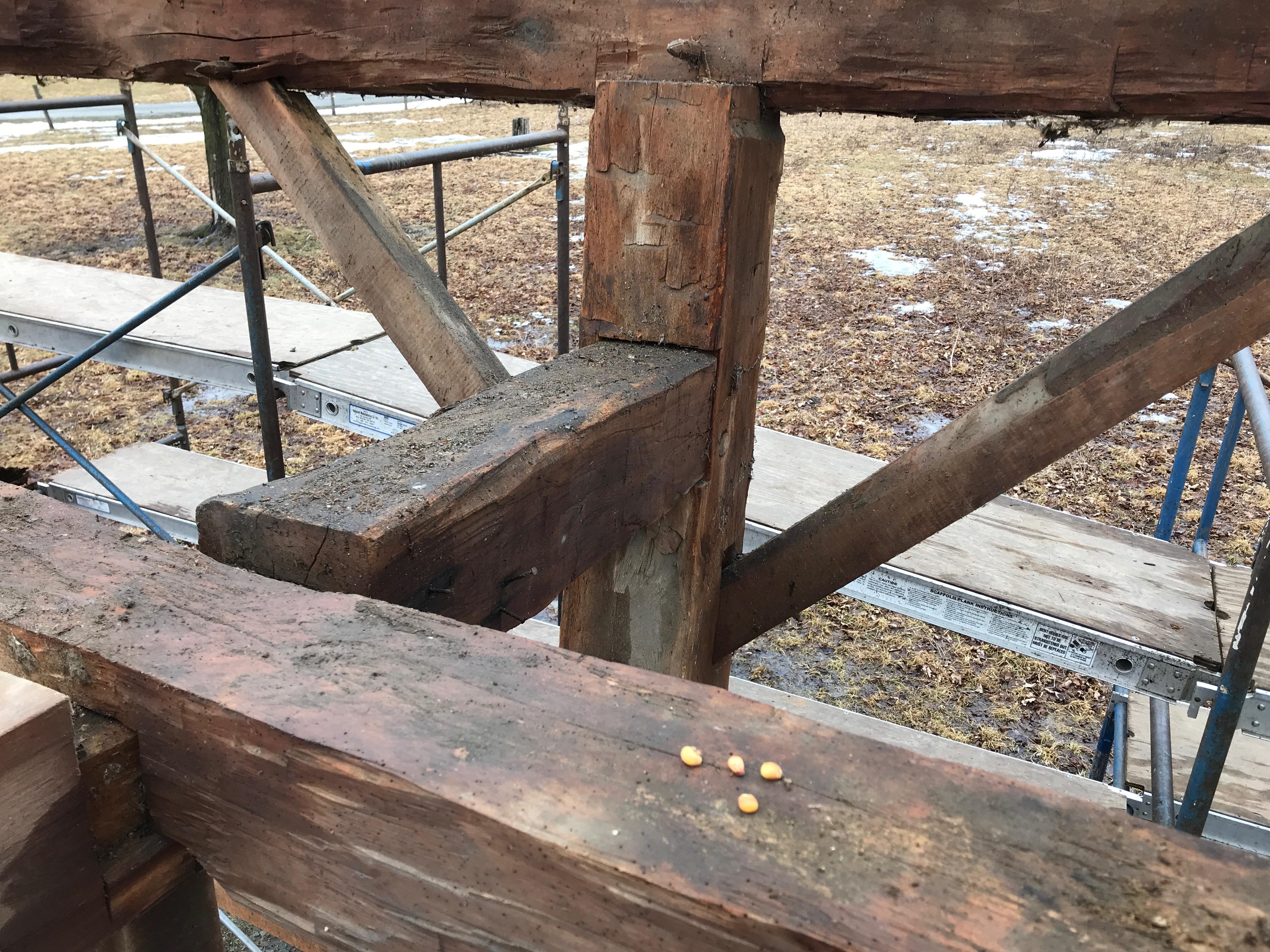 corn kernals from 1800s | rupert granary | green mountain timber frames