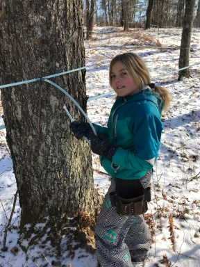 Kiara making maple syrup for green mountain timber frames and gardens