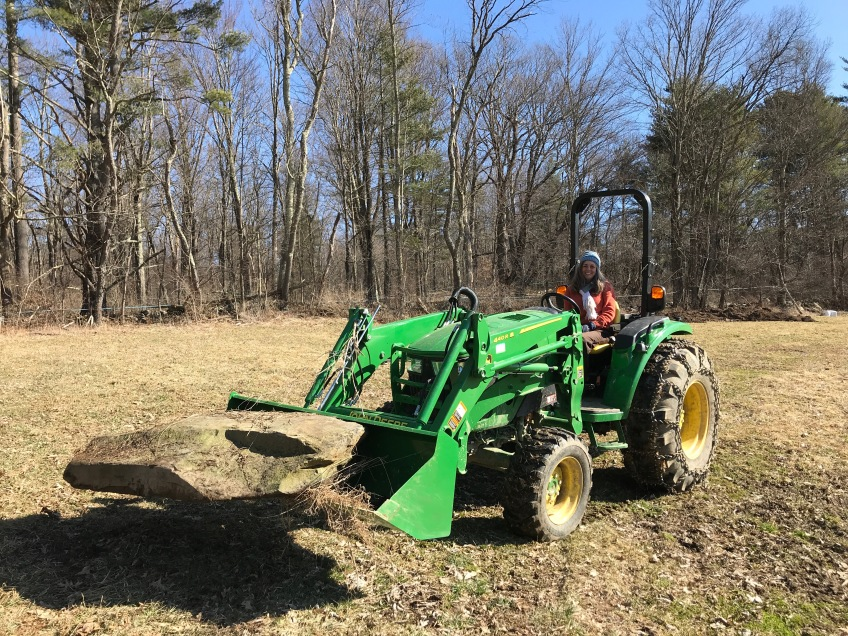 tractor collecting rocks to build foundation for restored barn